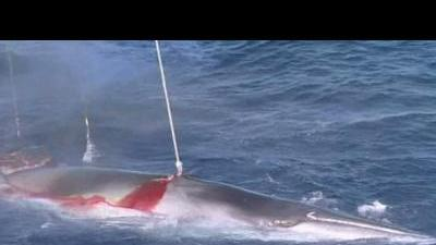South Korea to restart whale hunting