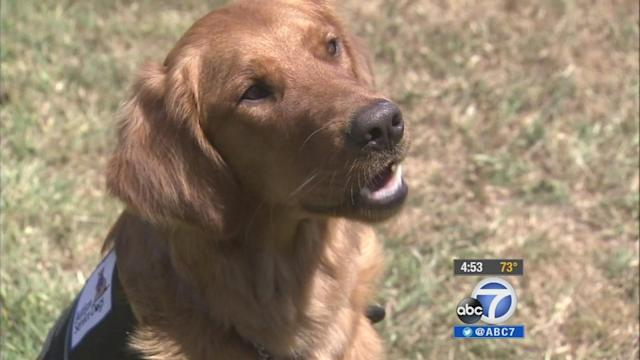 Prison inmates train service dogs to help kids with autism