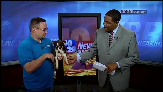 Adopt Dutch from the Washington County Animal Shelter