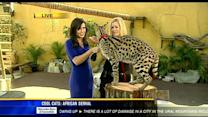 Zoo Discovery Days: Cool cats