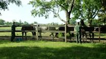 Racehorses teach New York inmates unexpected lessons 30 years on