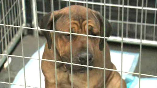 Pets not picked up after Sandy to be put up for adoption