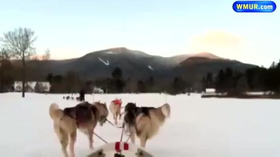 Dog sledding at Waterville Valley
