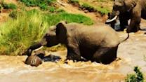 Instant Index: Elephant Calf in Kenya Rescued From a Swollen River by Her Amazing Mother