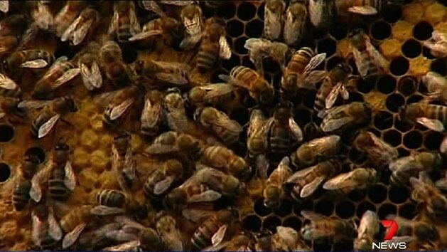 Europe takes action to save bees