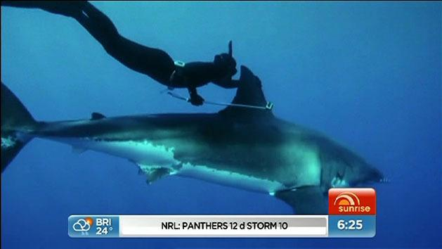 Woman free dives with Great White shark