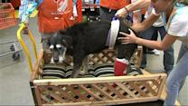 Dog With Cancer Designed Custom Ride by Home Depot Employees