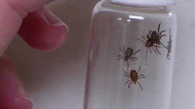 New ticks spread across southeast, diseases rise