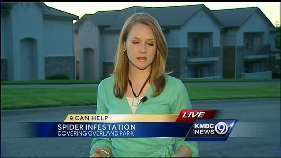 Couple sees action about brown recluse spider infestation