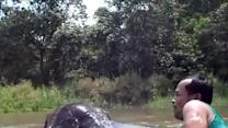 Swimming With a Baby Elephant