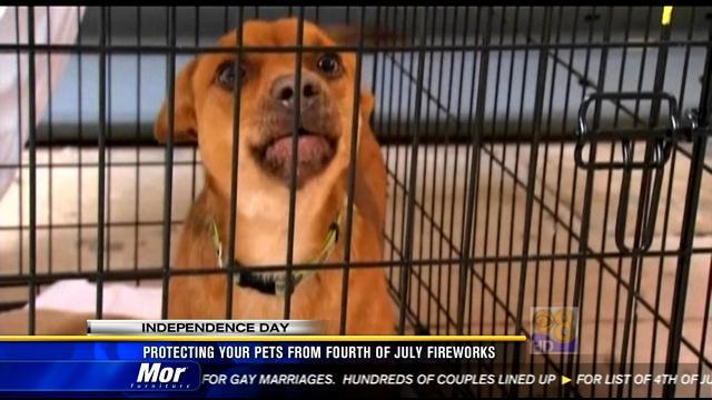 Protecting your pets from Fourth of July fireworks