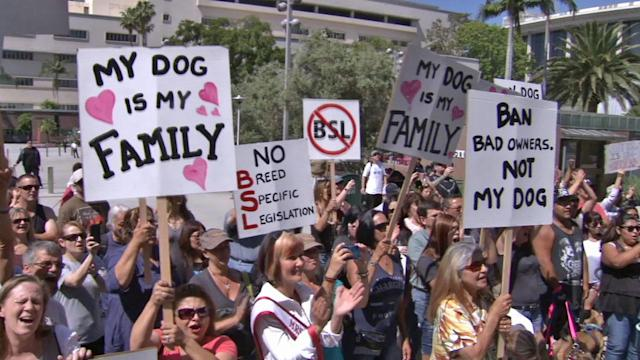 Pit bull owners rally against discrimination