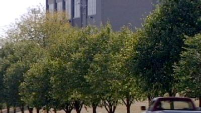 Drought Putting Heavy Strain On Trees