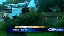 Strong winds take out tree in Citrus Heights