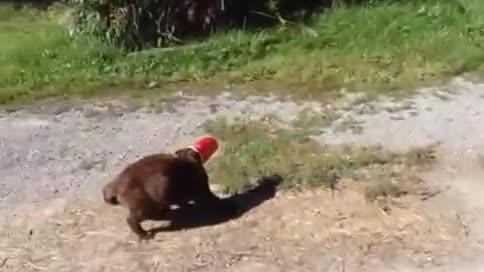 Dog Frees Cat's Head Stuck in Cup