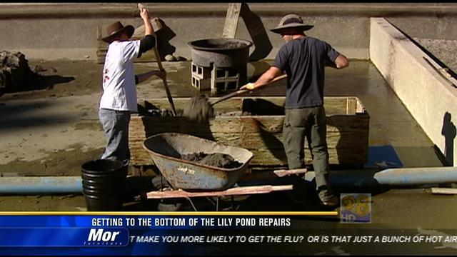 Getting to the bottom of the lily pond repairs