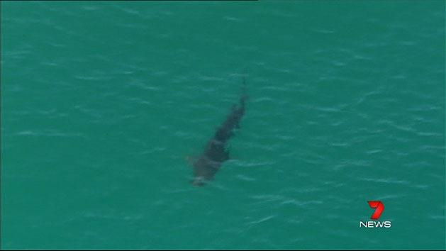 Sharks spotted close to shore