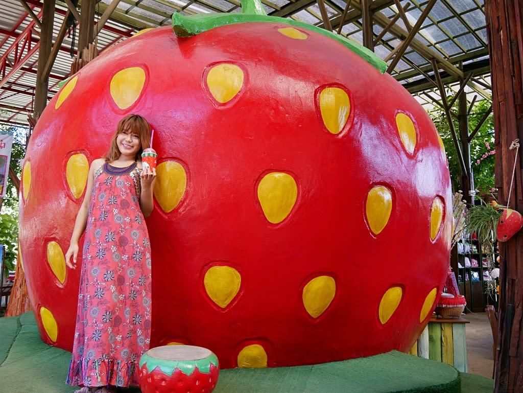 『泰國。擺鎮』Pai推薦景點 Love Strawberry Pai草莓園 1095公路旁山景環繞的紅色草莓園,各種草莓裝置藝術拍到手軟,草莓、冰沙、果醬等這裡通通都買的到,草莓控必去景點 2018/1117-1125 清邁 清萊 擺鎮 國際水燈節自駕八天七夜之旅
