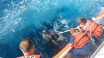 U.S. Coast Guard rescues 800-pound turtle off Jersey coast