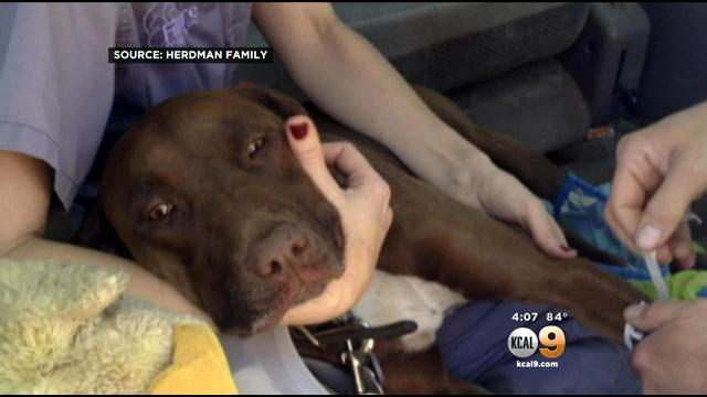 Scaled Back Search For Firefighter Continues After Dog Found Near Fillmore