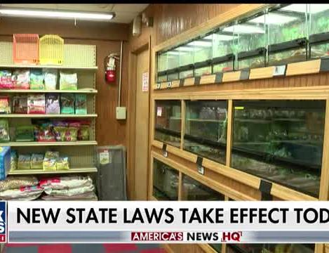 Landmark pet store law in California among the slew of new 2019 state laws  taking effect on New Year's Day