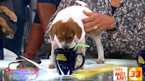 'GMA' Hot List: The anchors celebrate National Puppy Day