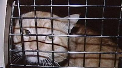 Animal Services Seize 35 Cats From Marion County Home