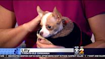 Furry Friend Finder: Lilly And Dexter