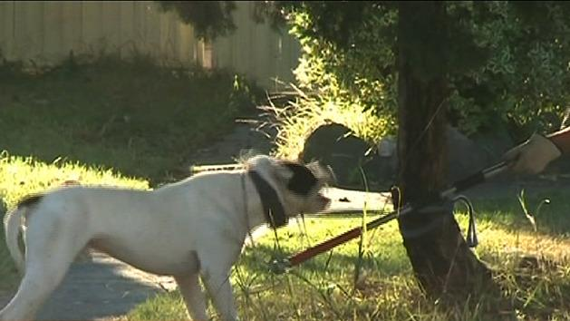 Man charged over Sydney dog attacks
