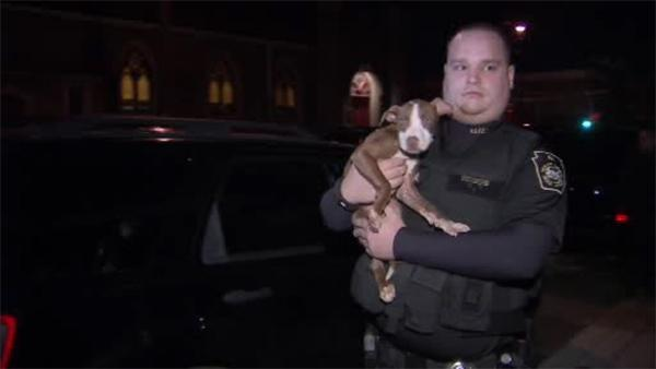 Multiple dogs found malnourished in South Philadelphia