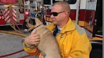 Pets rescued from house fire in Newark, Delaware