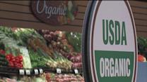 No testing procedures in place to assure organic produce is chemical-free, so we tested ourselves