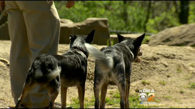 Dogs Play Big Role For Elephant Handlers At Pittsburgh Zoo