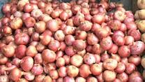 Govt likely to ban onion exports to check price rise
