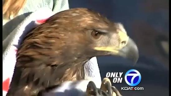 Eagle on the mend follow power station accident