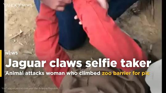 The jaguar who attacked a woman taking a selfie won't be put