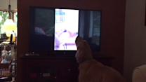 Hobbes the Dog Duets With Himself
