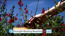 UC Davis Arboretum Selling Drought-Resistant Plants On Saturday