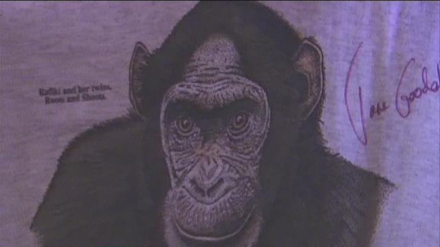 World's foremost experts on chimpanzees visits Kern County