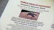 Officials discover yellow fever mosquitoes
