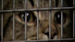 Group Helps Control Feral Cat Population