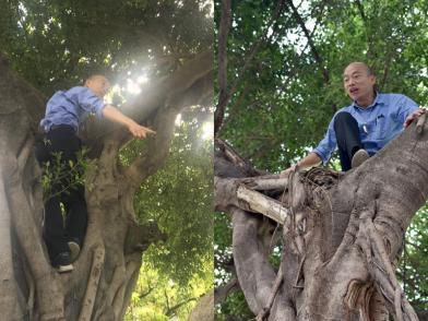 韓視察 爬樹3米高看積水