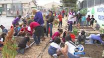 LAUSD challenges kids to get out and garden