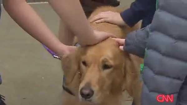 Therapy dogs helping CT kids deal with grief