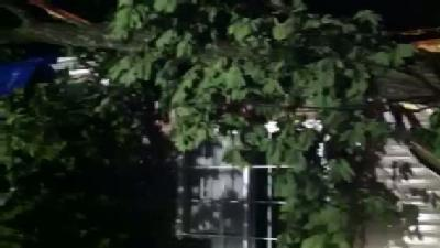 RAW VIDEO: Tree Lands On House In Mercersburg