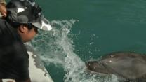 Dolphins Make a Splash With Blind Students