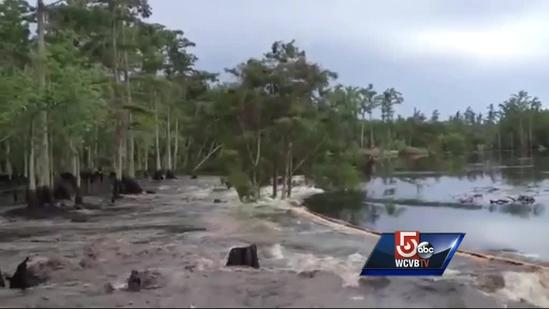 Amazing video: Sinkhole swallows stand of trees