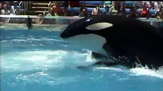 Committee Sidelines SeaWorld Killer Whale Ban