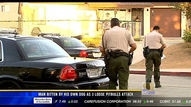 Pit bull owner arrested after dogs chase man in Imperial Beach
