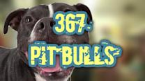 367 dogs rescued from massive dog fighting ring
